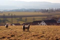 sulzbach011
