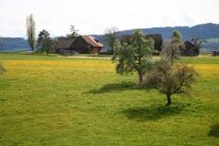 sulzbach018